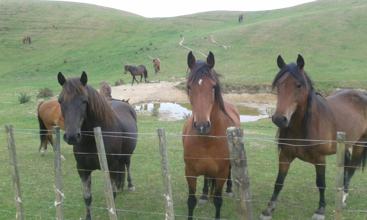 Lunchtime for wild horses